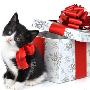 güzel hediyeler